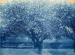 155 best la primavera images on photo trees and