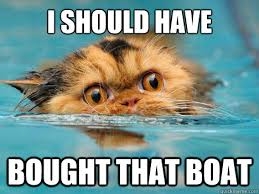 Cat Buy A Boat Meme - i should have bought that boat drowning cat quickmeme
