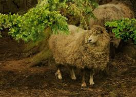 Sheep Home Decor 91 Best Sheep Images On Pinterest Sheep Animals And Farm