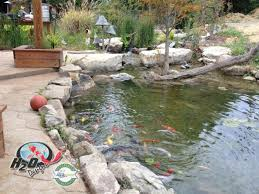 backyard pond ideas for your landscape lexington kentucky ky