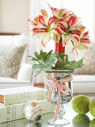 Flower Arrangements For Tall Vases Amaryllis Care And Decorating Ideas For Christmas From Better