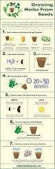 Urban Herb Garden Ideas - best 25 hydroponic herb garden ideas on pinterest when to plant