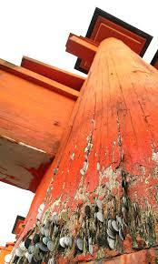 Meme Coins - put me like 盞 the base of the famous torii gate at miyajima island