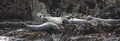 California wildlife tours images Wildlife tours atlantic whale wildlife tours jpg