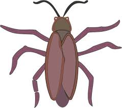 cockroach pictures kids free download clip art free clip