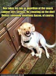 Dog Bacon Meme - funny bacon treats for dog dump a day