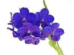 Orchid Bouquet Free Photo Orchid Bouquet Flower Blue Free Image On Pixabay