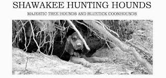 6 month old bluetick coonhound weight shawakee hunting hounds home facebook