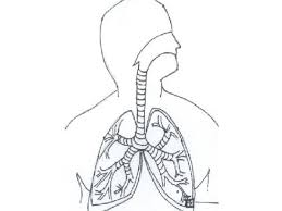 coloring respiratory system coloring page