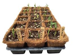 54 coco fiber seed starter pots 3 5 u201d square with trays and 24