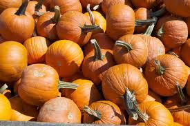 8 impressive health benefits of pumpkin huffpost