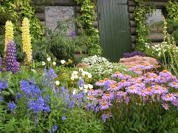 beautiful cottage garden plants ideas planted with various kind of vines and plants plus colorful flowers in the wall and backyard of rustic house with