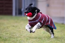cani in cerca di casa maglioni per cani neri in cerca di casa i miei animali