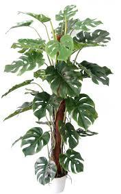 Tropical Plants Images - tropical feature plants