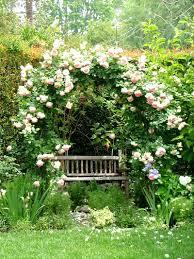 backyard rose garden design home design ideas