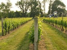 backyard grape vineyards harvester harvester 2 vineyards vines