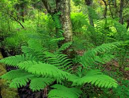 Free Picture Leaf Nature Fern Free Picture Fern Leaf Nature Forest Leaf Tree Foliage