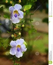 Best Restaurants In Connecticut 2016 Experts U0027 Picks 100 Vine Plant With Purple Flowers In The Garden Wild Vine