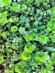 effortess beauty low maintenance ideas for your front garden