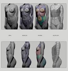 Female Anatomy Figure 131 Best Anatomy Reference Images On Pinterest Human Anatomy