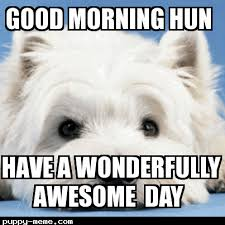 Cute Good Morning Meme - 20 adorable and cute good morning memes word porn quotes love