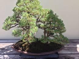 zoom times tiny trees