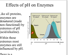 factors affecting enzyme activity youtube