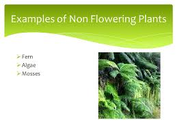 classifying plants and animals ppt download