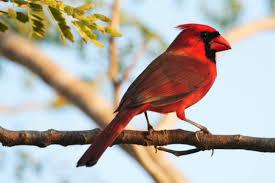 a beautiful bird on a branch bird conservation