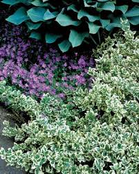Flowering Shrubs That Like Full Sun - the only shrubs you need to grow fine gardening