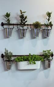 indoor herb garden in small pots hanging from a bar in front of