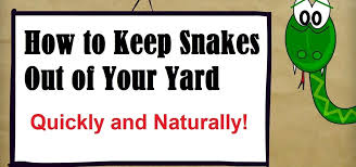 Snake In The Backyard by How To Keep Snakes Out Of Your Yard Housekeeping Wonderhowto