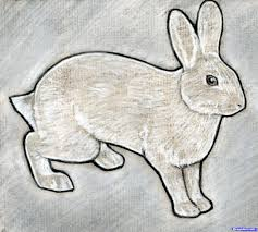 drawn bunny shaded pencil and in color drawn bunny shaded