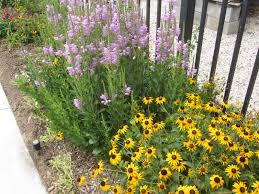 front yard landscaping ideas with flowers the garden for flower