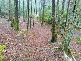 Shining Rock Wilderness Map Bridges Camp Gap Trail On Hikewnc