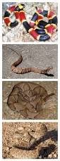 How To Avoid Snakes In Backyard Backyard Snake Safety Texas Home And Garden