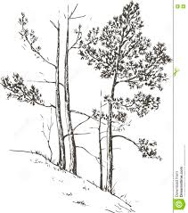 pine trees at hill stock vector image of forest drawing 73206538