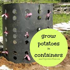 Patio Potato Planters Creative Ways To Grow Potatoes In Containers Preparednessmama