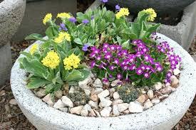 Best Plants For Rock Gardens Plants For Rock Gardens Rock Garden And Also Green Plants