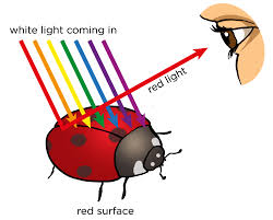 Path Of Light Through The Eye Natural Sciences Grade 8