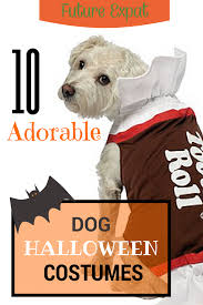 Dog Halloween Party Ideas 10 Adorable Dog Halloween Costumes U2013 Future Expat