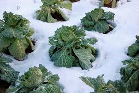 central north carolina planting calendar for annual vegetables