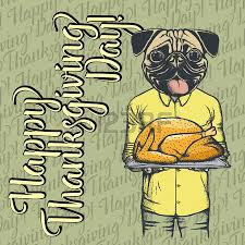 vector illustration of happy thanksgiving day pug concept