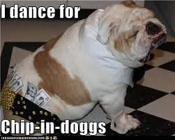 Funny Stripper Memes - i has a hotdog male stripper funny dog pictures dog memes