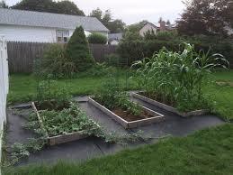 my backyard garden u2013 two months out piggy bank builder creating
