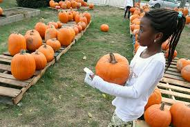 pumpkins for sale pumpkins sale at lowell church oct 23 2017 mng low