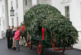 christmas tree delivery greensboro christmas tree delivery celebrate don t stress kw