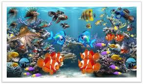 nemo u2013 clownfish saltwater freshwater