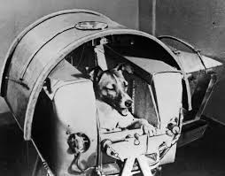 West Virginia How To Travel With A Dog images Laika the cosmonaut dog ussr sends first living creature into jpeg