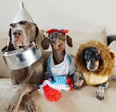 Halloween Costumes Dachshunds 166 Dressed Doxies Images Dachshunds